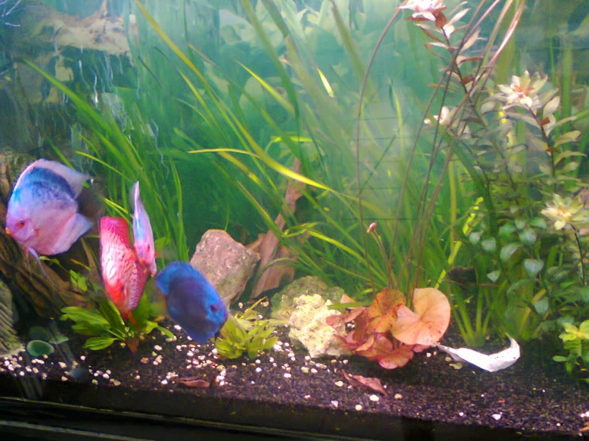 Dennerle t8 color plus trocal tube t8 fluorescent tubes for Aquarium avec filtre pour poisson rouge