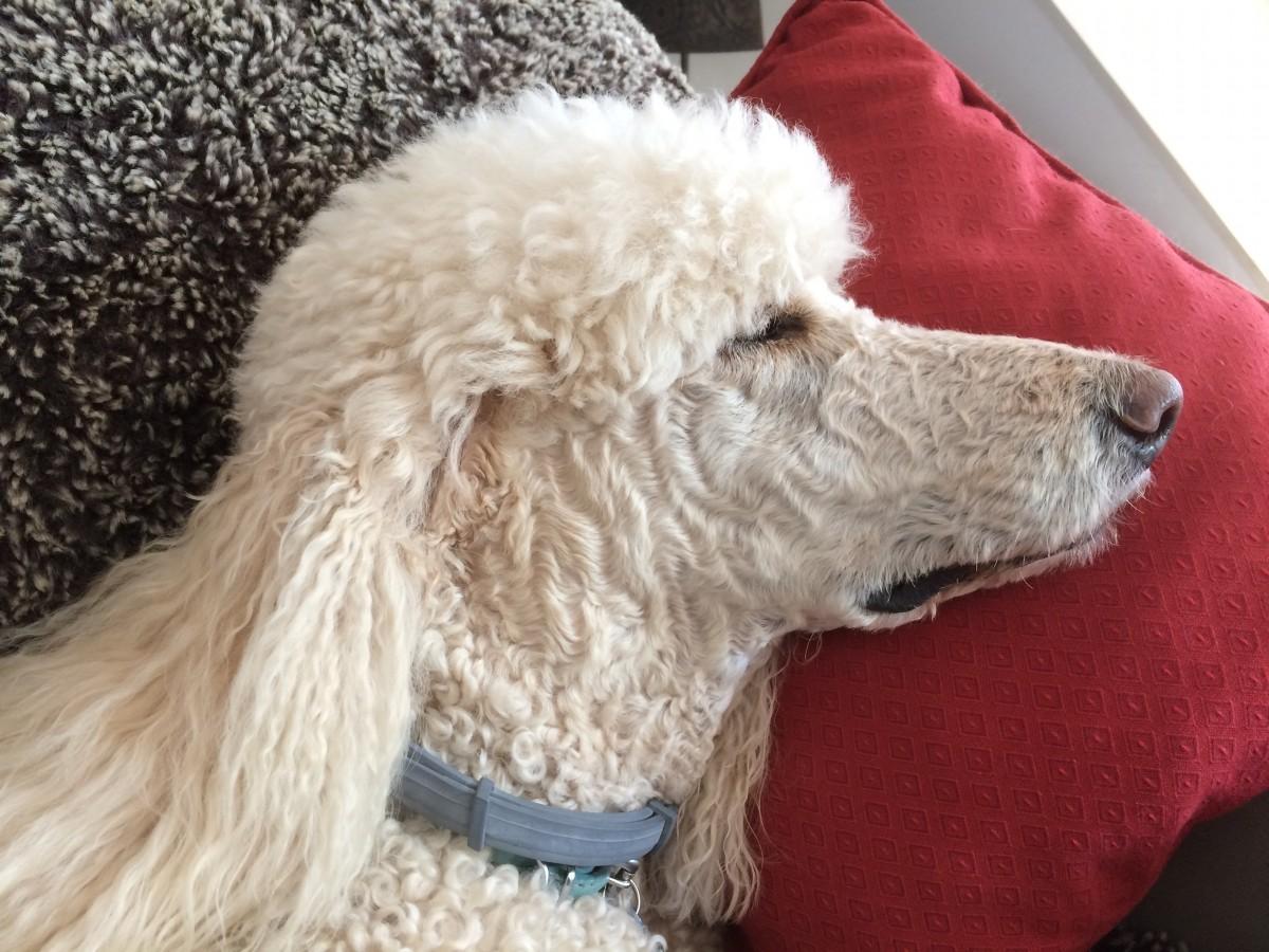 Seresto Flea And Tick Collar Dog Flea And Tick Collars