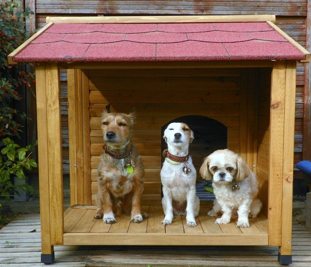 reviews about natura dog kennel with terrace. Black Bedroom Furniture Sets. Home Design Ideas
